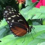 Vlindertuin Honfleur