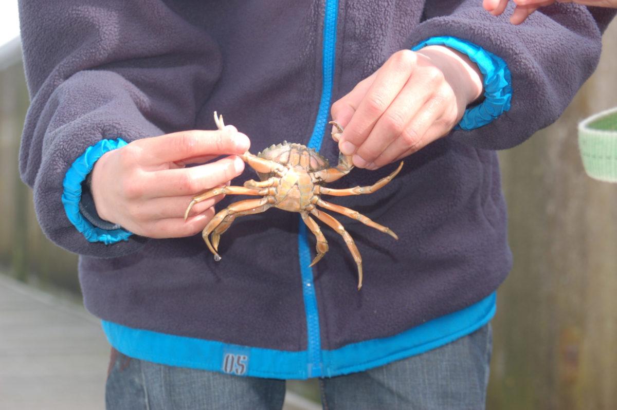 Krabbetjes vangen